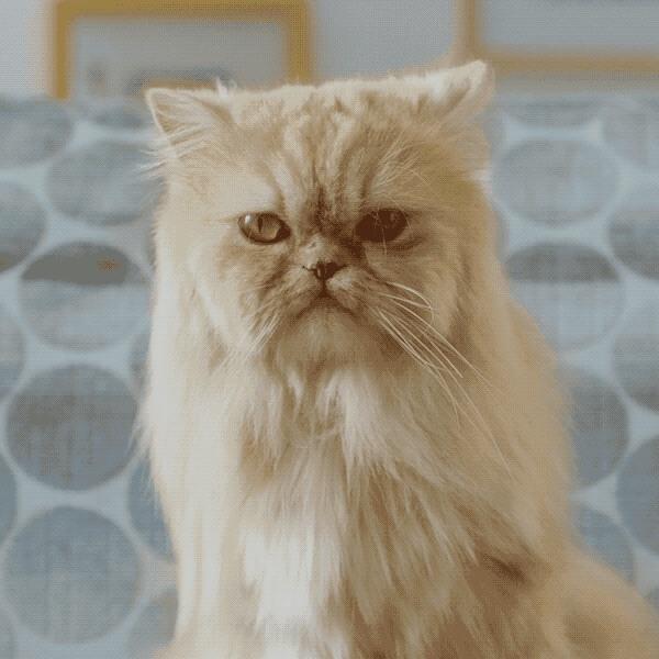 LUA / Wieden+Kennedy e um gato adoravelmente sacana